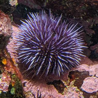 Monterey Bay Aquarium 05