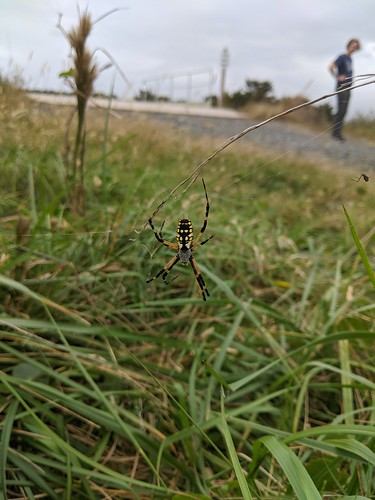 Spider at Bodie lighthouse