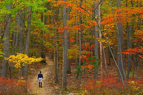 Catoctin: Autumnal forest
