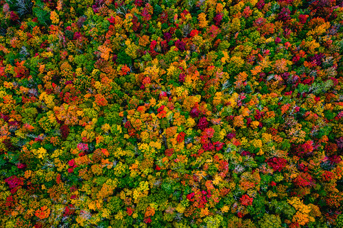 autumn foliage plants nature aerial trees maple drone lamoillecounty travel forest america northamerica fallcolours unitedstates landscape vermont season fall theunitedstatesofamerica us usa jericho unitedstatesofamerica