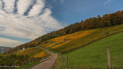 landscape landschaft nature himmel outdoor imfreien natur sonyfe1635mmf4zaoss sonyilce7r2 baum gras sky clouds sony wolken herbst wettingen kantonaargau schweiz
