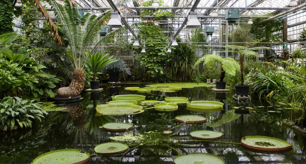 Gratis bezienswaardigheden Gent | Plantentuin van de Universiteit Gent