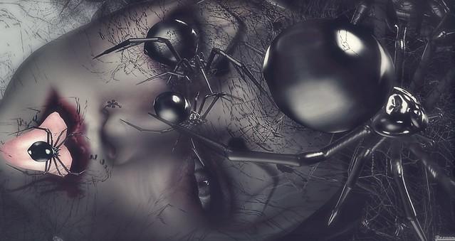 ► ﹌Arachnéide.﹌ ◄