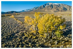 Owens valley fall color