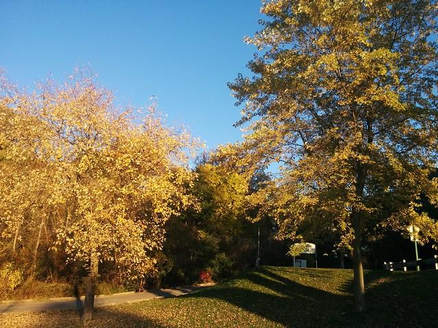 Etienne Brûlé Park (1) #toronto #etiennebrulepark #humberriver #fall #autumn #yellow
