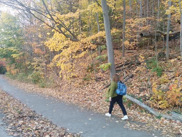 Walking in yellow #toronto #etiennebrulepark #humberriver #fall #autumn #yellow #leaves