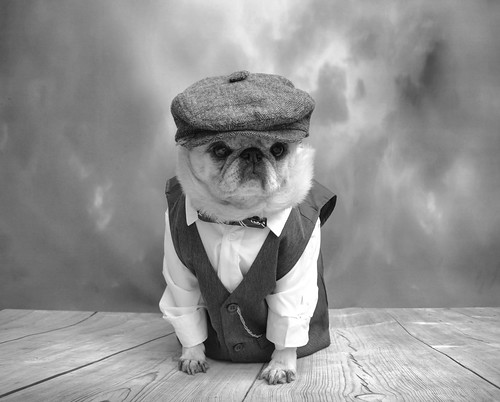 Puggy Peaky Blinders 2 | by DaPuglet