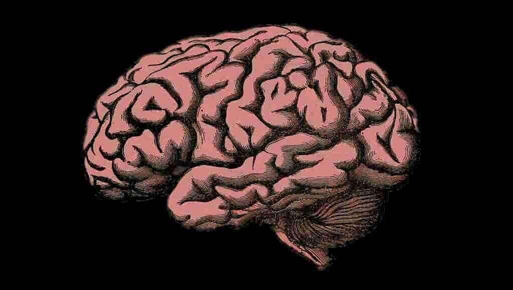 neurones-de-navigation