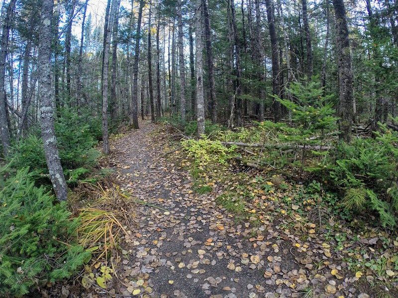 Nine Mile River Trails