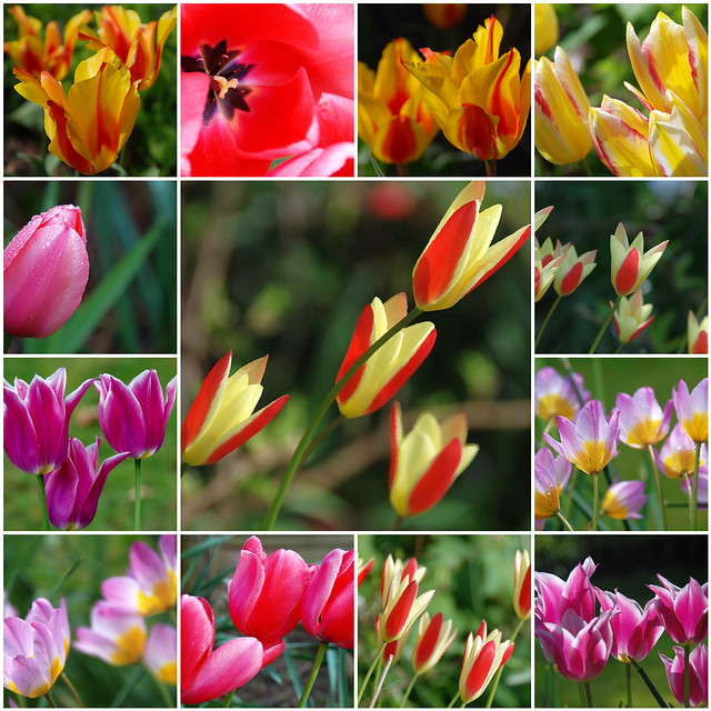 When It Comes to Gardening Tulips Put a Spring in Your Step!