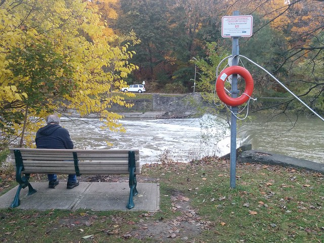 Waiting #toronto #etiennebrulepark #humberriver #fall #autumn #yellow