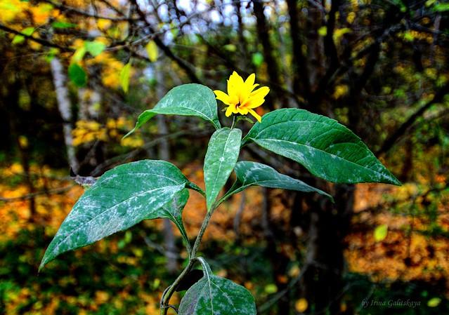 Flower in autumn forest