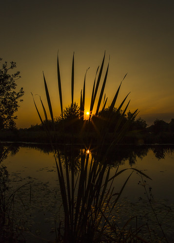 canon6d nature outsode outdoors landscape waterscape sun sunset golden plants trees water lake reflection silhouette uk cambridgeshire