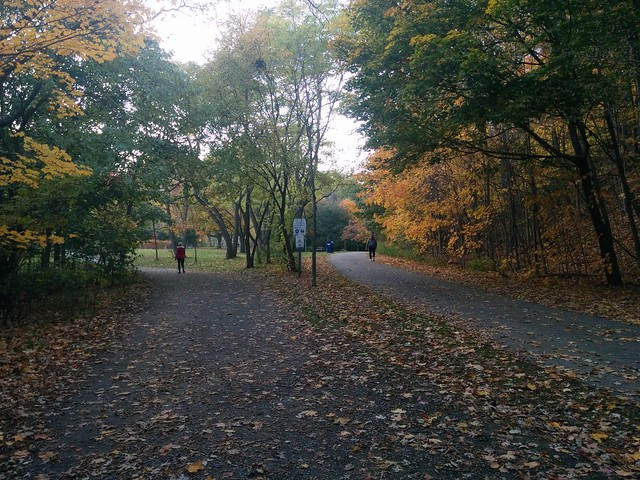 Two paths diverge #toronto #etiennebrulepark #humberriver #fall #autumn #yellow #green #path