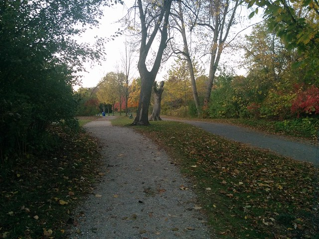 Path ahead #toronto #humberriver #magwoodpark #fall #autumn #yellow #path