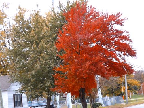 tree trees fall