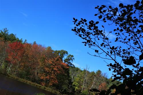 fall falling autumn foliage colors blueskies