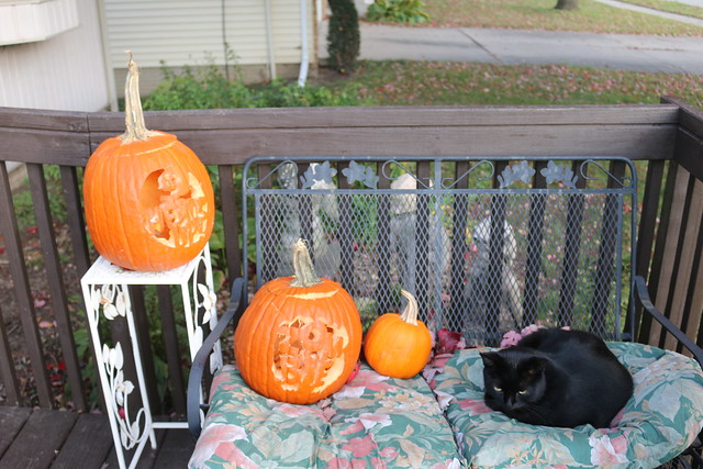 Stray cat found a resting place with pumpkins.