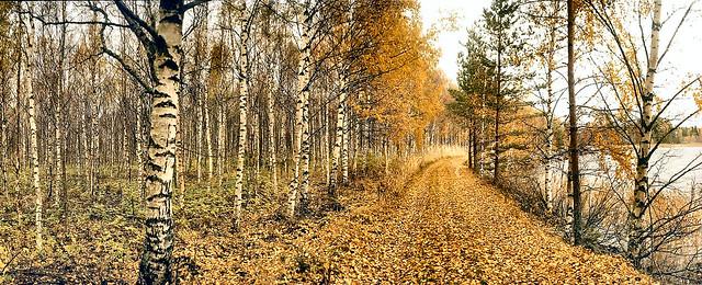 Autumn at