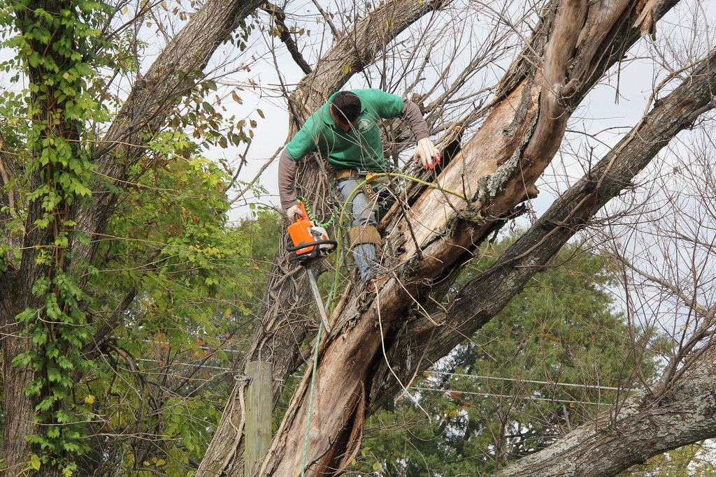 power tree trimmer