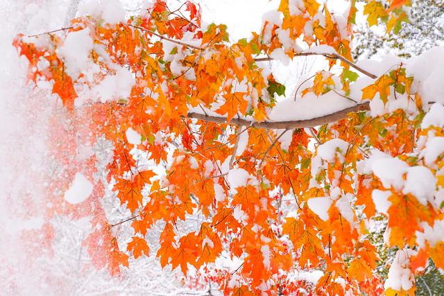 Autumn Snow - Colorado
