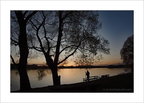 photographer nikon d7200 outdoors tree trees tonyprendergast elements nature northwest pennington sky sunlight sunset alone