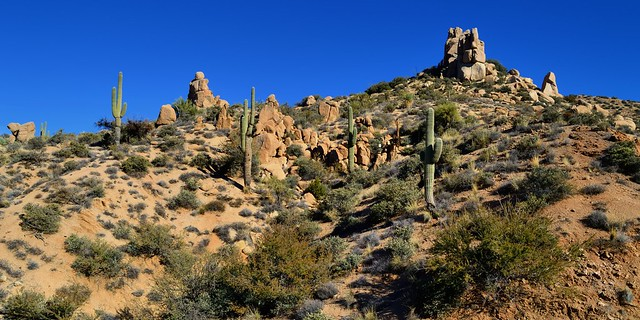 Sonoran Desert landscape, Gila county, Arizona.