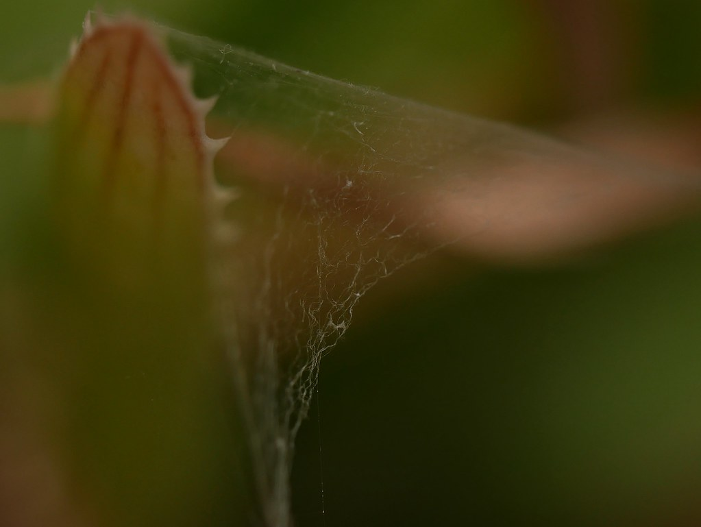 Delicate Web