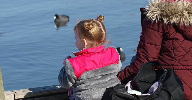 Cutie Watching Coots