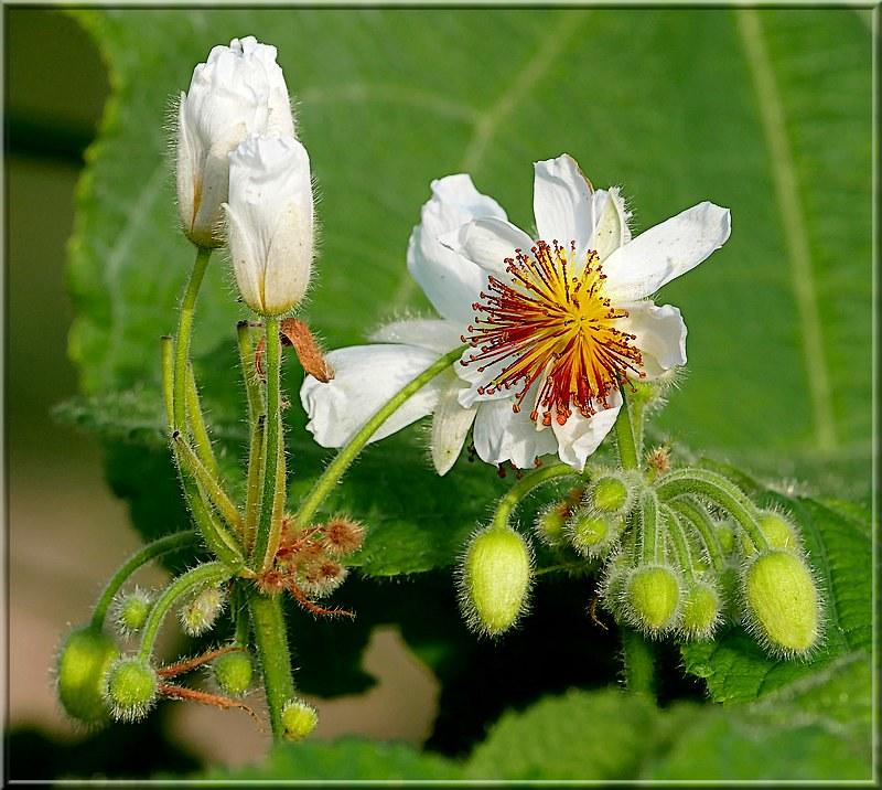 Au jardin des plantes. - Page 9 48982805151_dd9ae62ff8_c