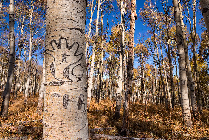Arborglyph