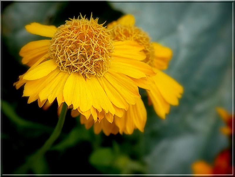 Au jardin des plantes. - Page 8 48983065652_16356a5c9d_c