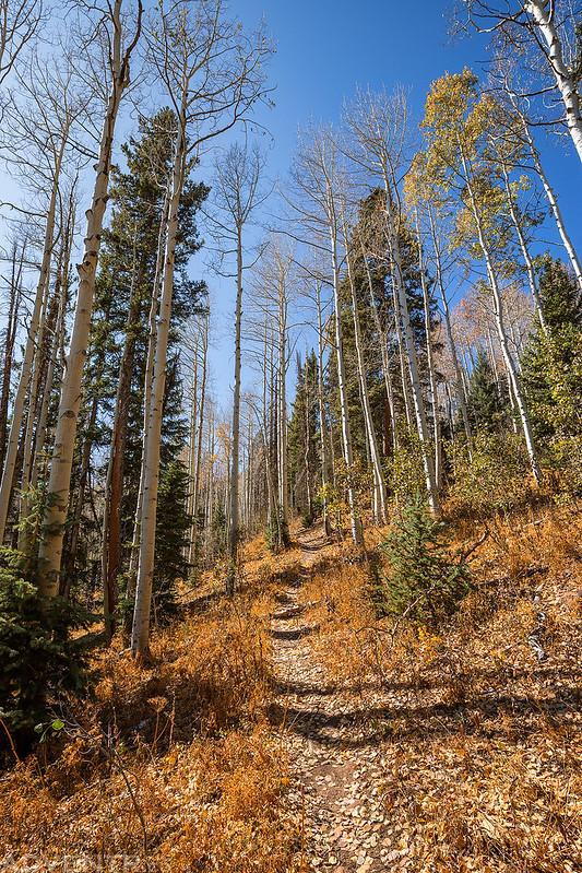 Pool Creek Trail