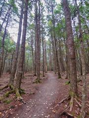 Nine Mile River Trails