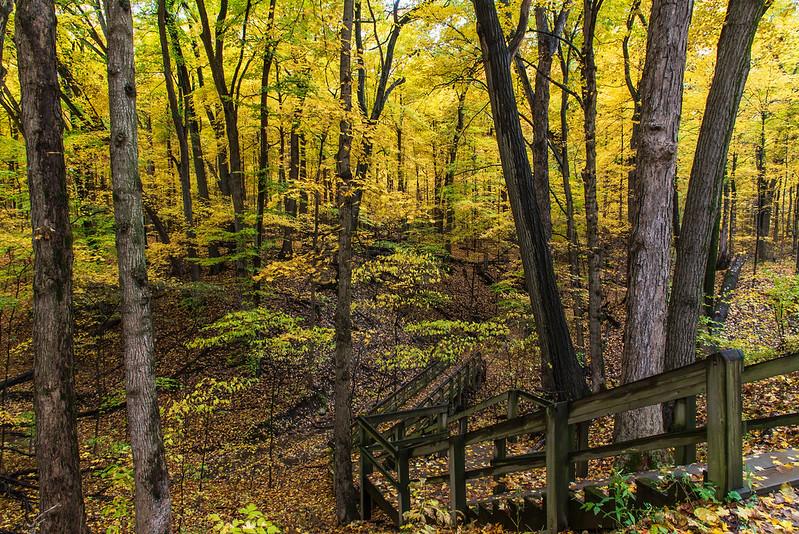 Descent Into Autumn