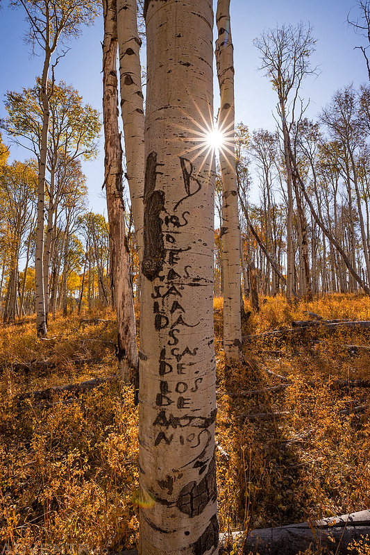 Arborglyphs Sunstar