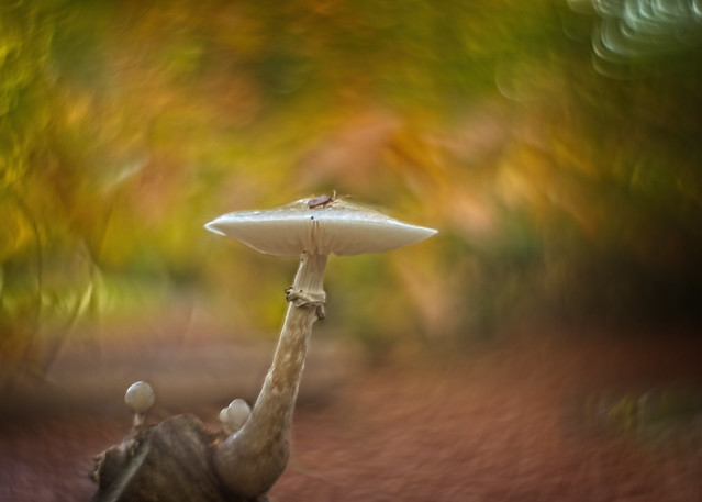 A porcellan mushroom in dark autumn colors