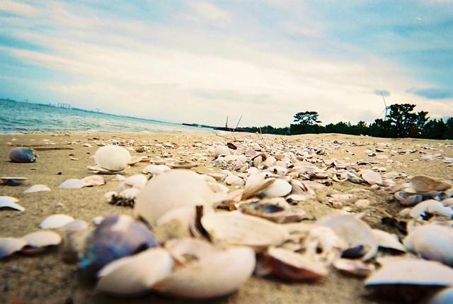 浜辺で君と2/IMG_5112