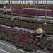 50243-001: High-Value Horticulture Development Project in Viet Nam
