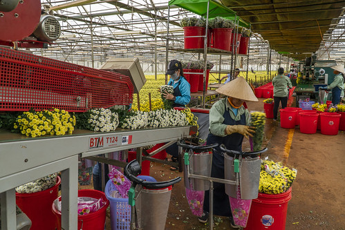 50243-001: High-Value Horticulture Development Project in Viet Nam | by Asian Development Bank