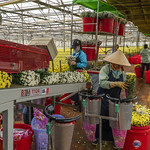 50243-001: High-Value Horticulture Development Project in Viet Nam