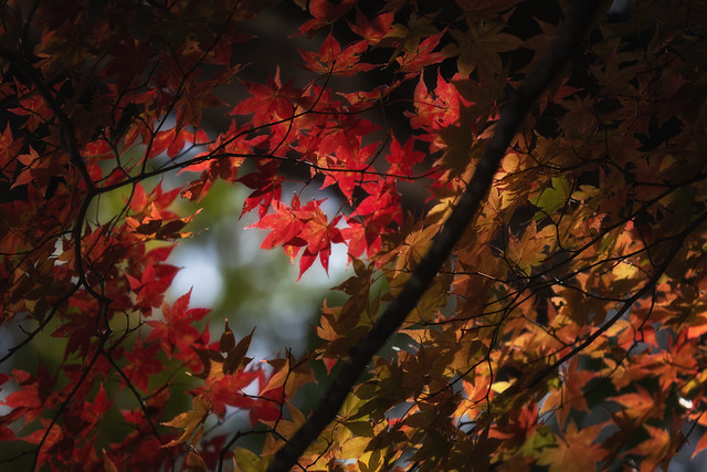 Progession of Fall