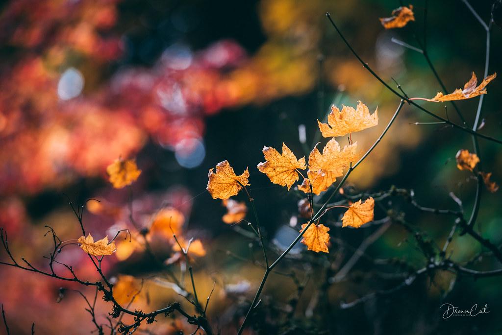 Color Season