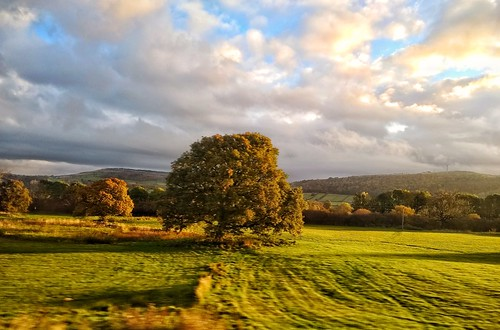 northern rail snapseed aire valley airedale sunrise field motorola trees tree