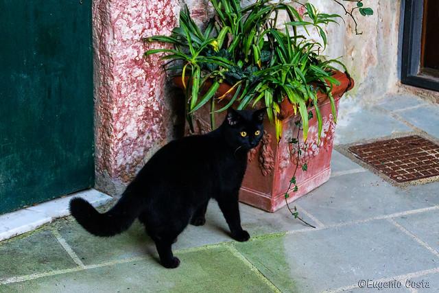 Gatto vieni qui... - Cat come here ...