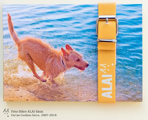 Foto llibre ALAI bàsic groc taronja.