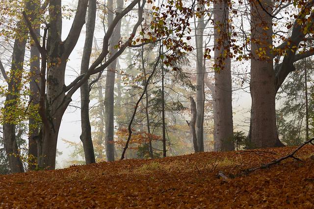 Herbsttag im Märchenwald