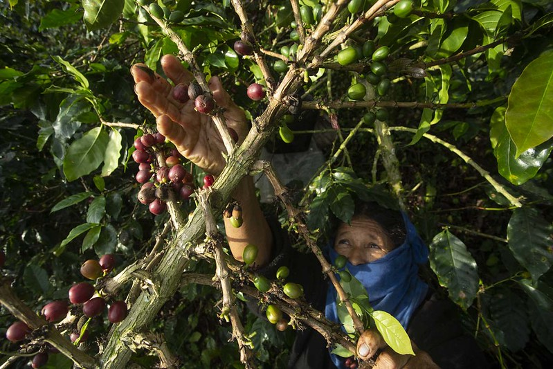 Challenge of young to preserve the coffee culture