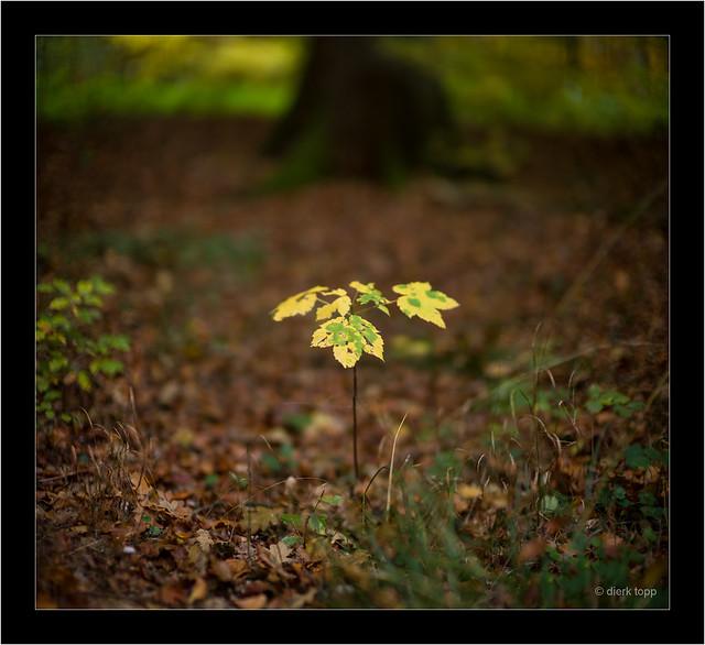 Leica M9, Noctilux 0.95/50mm@f/0.95