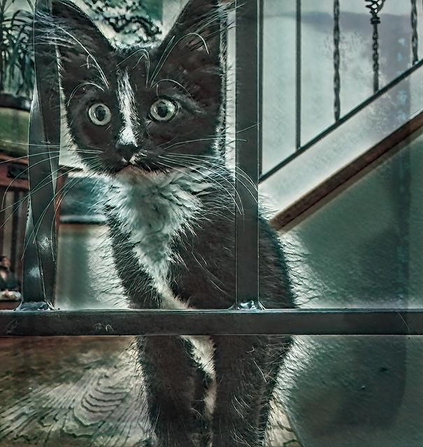 Scaredy Cat - Happy Halloween!